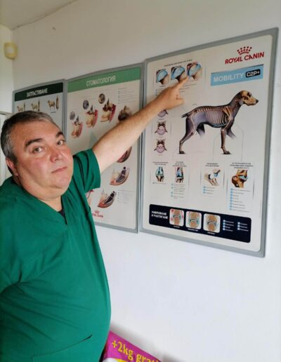 Dr. Zdravko Dimitrov showing a poster of a health bone structure in dogs at MedinaVet